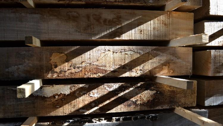 Balken iepenhout opgelat